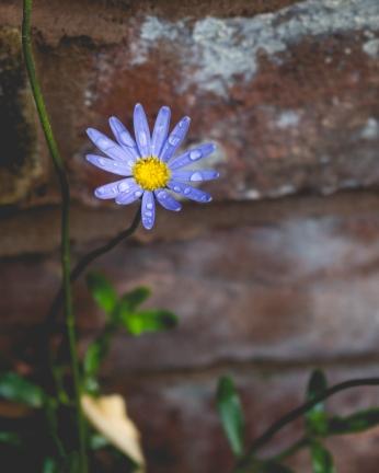 garden (25 of 30)
